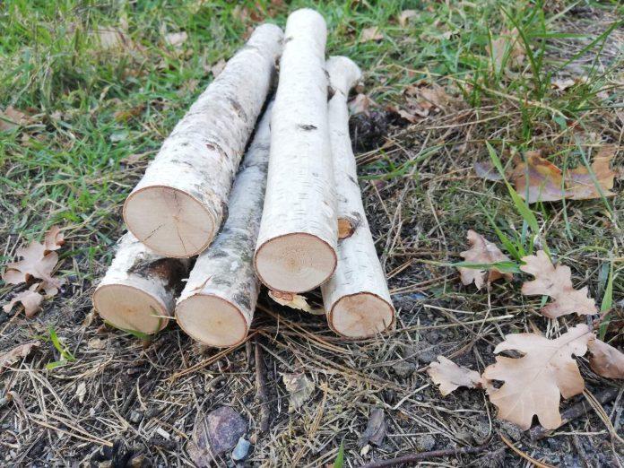 Birch logs for sale
