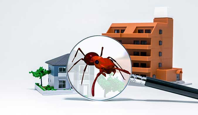 Termite Inspection Cost Adelaide